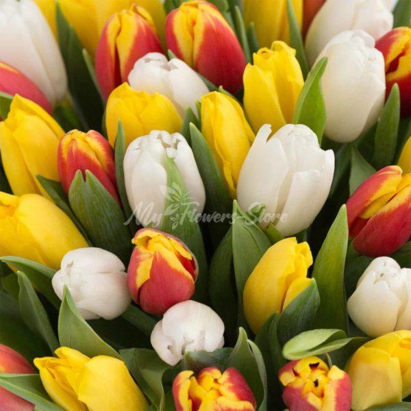 51 микс желтый и белый тюльпан