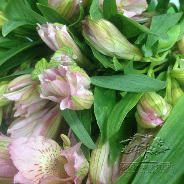 Букет из синих ирисов, тюльпанов и альстромерий Нью Йорк