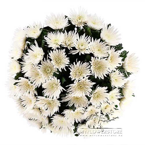 Букет из белых хризантем Анастасия