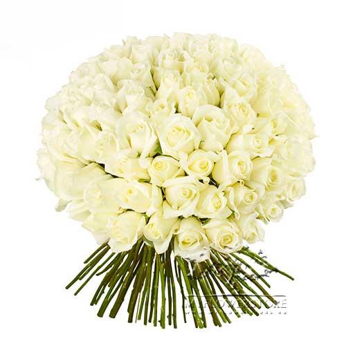 101 роза белая Мерида